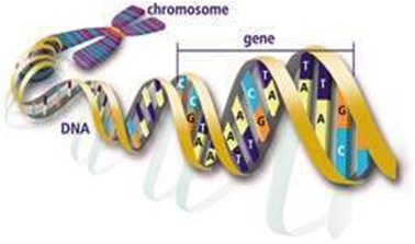 gallery/attachments-Image-genomics_image